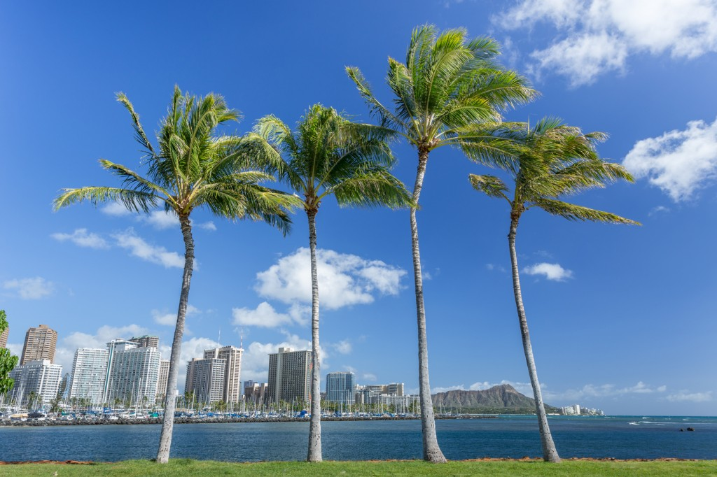 Coconut palm tree with Diamond head mountain background, Hawaii